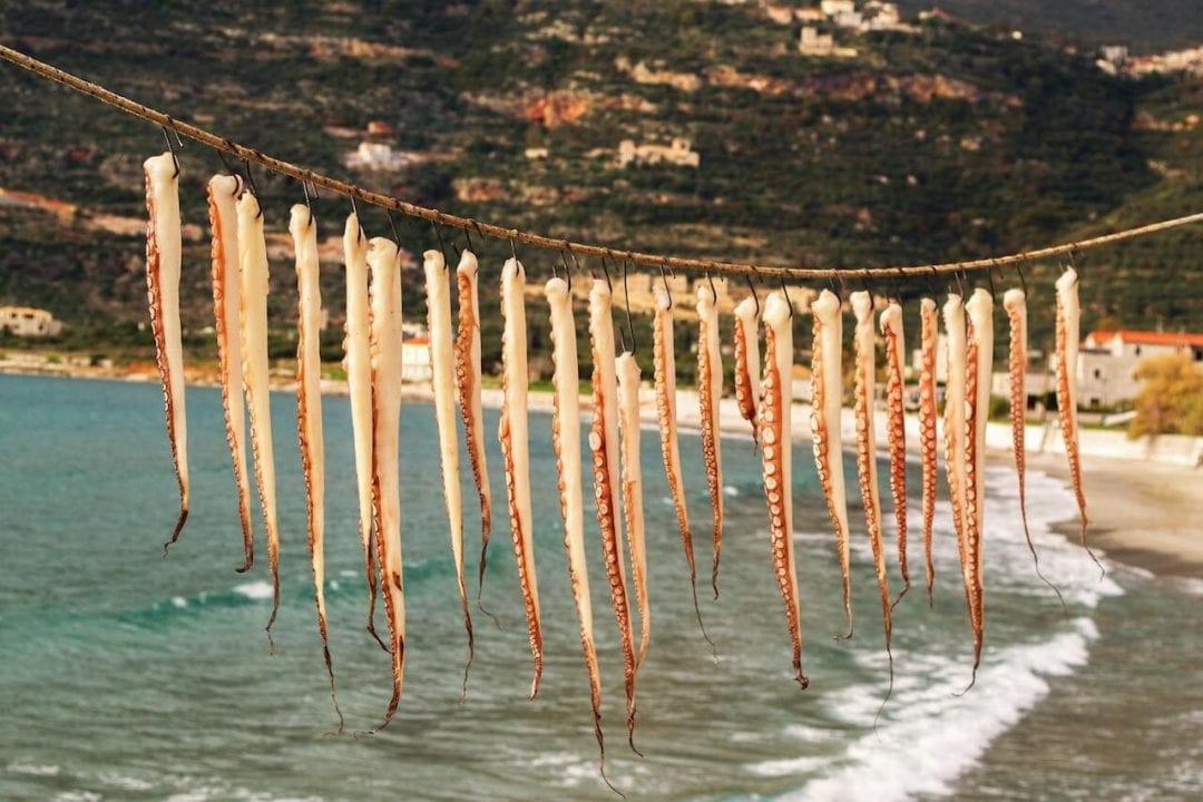 Polpo steso ad asciugare al sole, una antica tradizione marinara