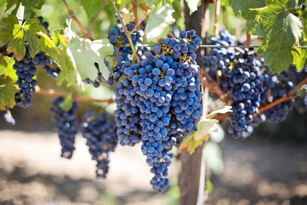 La prima introduzione dei voucher era avvenuta il 19 agosto 2008 con circolare INPS che autorizzava la raccolta dell'uva