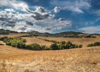 Toscana, campi coltivati