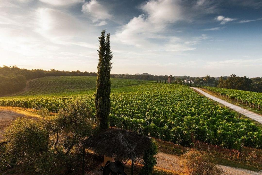 Un suggestivo paesaggio vitivinicolo toscano