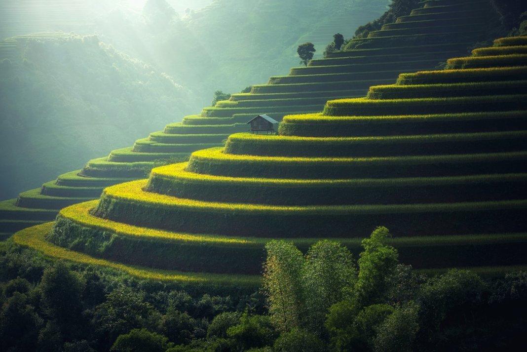 Piantagioni di riso asiatiche nell'ex Myanmar