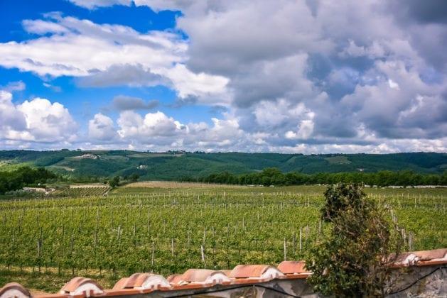Panorama sui vigneti dell'azienda Rocca di Montegrossi